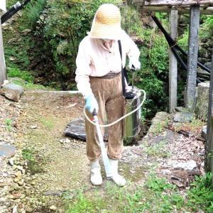 盆前に宅地への除草剤を