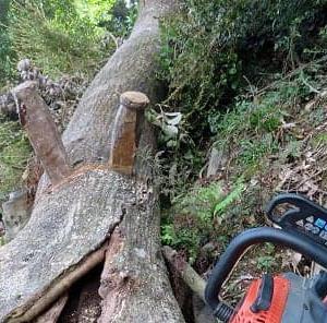 台風で折れた大木の整理