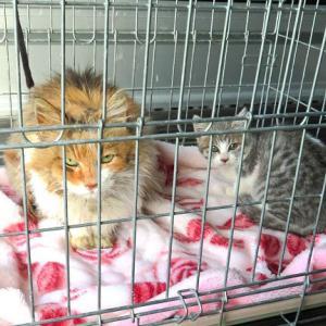 二匹の猫の引越し
