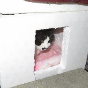 昨日作った猫の箱