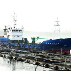 今年初の大型船で稚魚の買付け