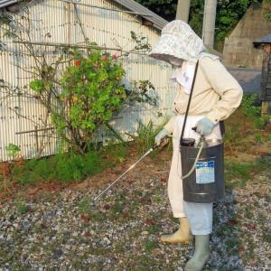 早朝から除草剤散布を