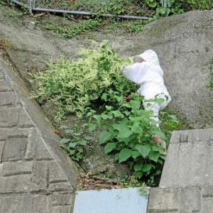 コンクリート壁面の草刈