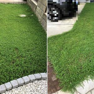 夏の庭 -2020- 草刈り日和