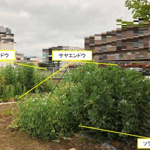 春の畑 -2019.4-