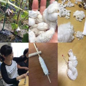 編み物教室 綿から、紡ぐ コットン100%の糸