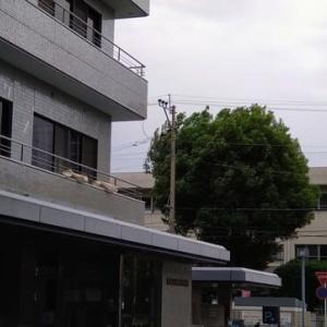 torii  miyuki