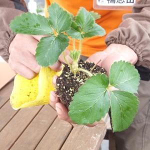 シェア畑深大寺 【イチゴ苗植えつけ・秋冬野菜のお世話】講習会が開催されました。