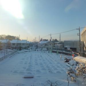 シェア畑深大寺 再び雪で覆われました。
