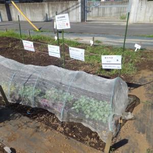 シェア畑深大寺 【秋冬野菜の苗植えつけ・種まき】講習会が開催されました。