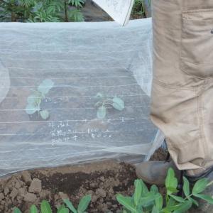 シェア畑深大寺 第6回講習会【秋冬野菜の苗植付(茎ブロッコリーなど)/ダイコン種まき/葉物の種まき/ニンニク植付】 が開催されました。