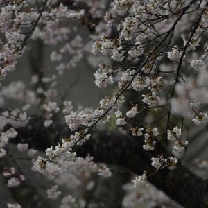 春爛漫だけど・・
