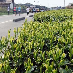 写真でつづる「第14回掛川・新茶マラソン」3