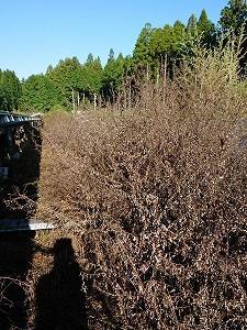 丹波市新郷発電所の草刈りをして頂きました。