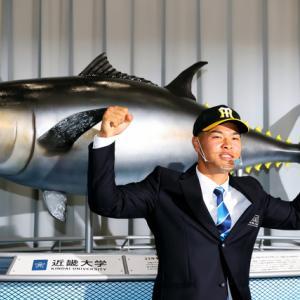タイガースが近大佐藤選手の指名権を獲得されました。