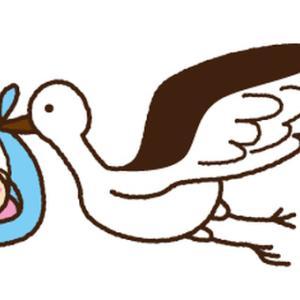 コウノトリが丹波市に飛来