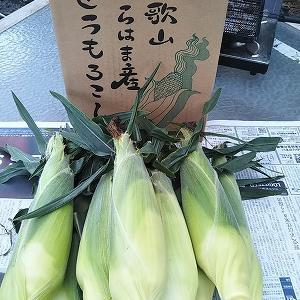 和歌山白浜のうか遠藤さんよりトウモロコシを送って下さました。