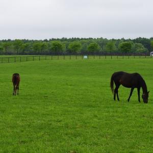 2019年10月 ノルマンディー募集馬見学ツアー①~牝馬 今年からJRAの番組に合わせて早めから使えるようにするそうです。