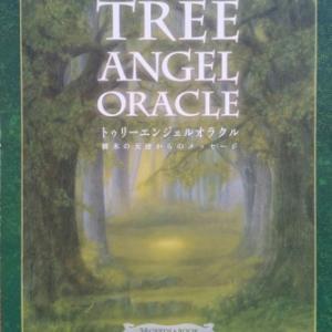 菩提樹のメッセージ☆静寂さを通して内なる知恵とつながりなさい