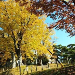 散歩移動運用(11月5日・木曜日)