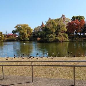 辰巳池へ(11月12日・木曜日)