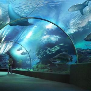 シーライフ(水族館)/マダムタッソー(ろう人形館)@サイアムパラゴンお得なプロモーション【PR】
