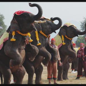サイニャブリーの象祭り