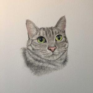 今日の猫さん(水彩画)