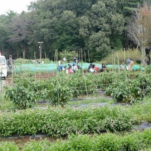 埼玉県農林公園で収穫体験!
