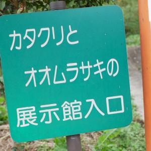 カタクリとオオムラサキの林と散策コース