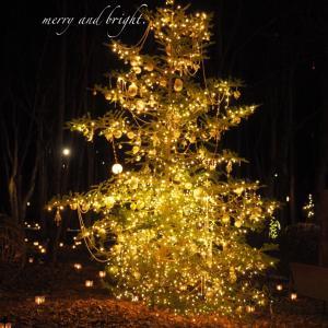 星降る森のクリスマス(マキ姉の誕生日)