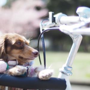 チリリーン自転車が好き. #自転車にのって #水元公園