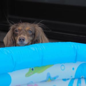 プールとまで言えない水遊び始めます#ベランダあそび #夏のあそび