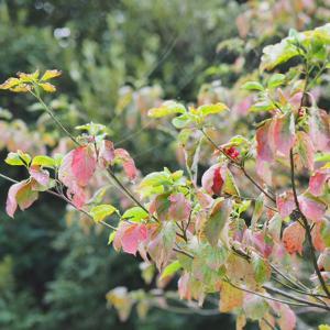 秋を感じたい