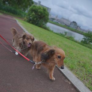 梅雨空の下 夕方散歩