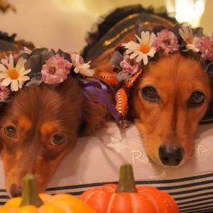 Halloweenリース&花冠作り