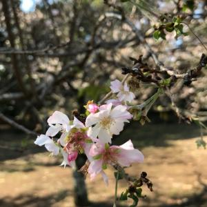 新宿御苑の花