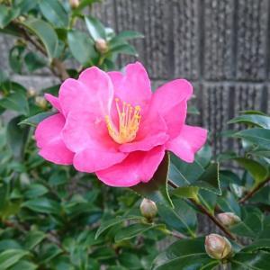 ++いつもと変わらない日々なのに*&庭のお花たち*++