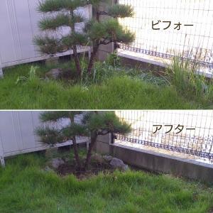 ++草引き②&植物の植え替え*++