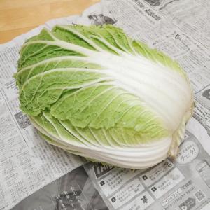 ++2021年*1月のお野菜便*++