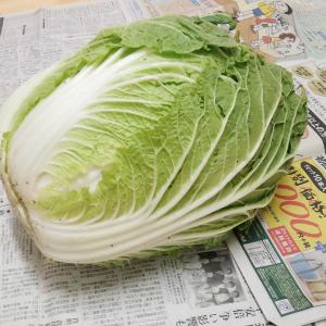 ++1月のお野菜*第2便*&長女の玉ねぎ*++