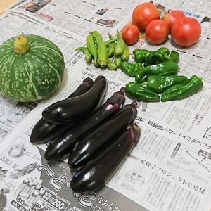 ++お野菜便&ナナのこと*++