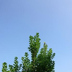 ++夏休みの朝ごはん*++