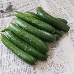 ++お盆前のお野菜便*++