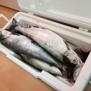 鮭釣り今シーズン開幕