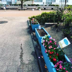 コミュニティで公園の花のお世話をしてみませんか