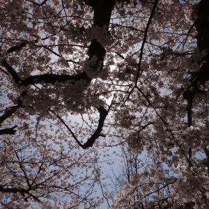 """私の""""お花見"""""""
