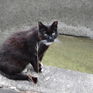 久しぶりの猫ブログ