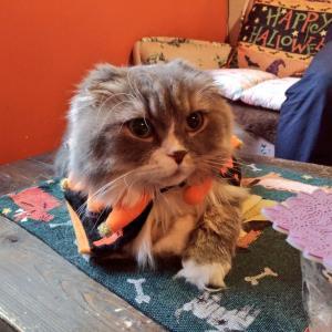 猫音の2018年ハロウィン