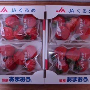 福岡県久留米市にふるさと納税をしていちごが届きました